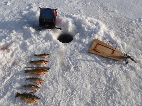 Icefishing for yellow perch in alberta the great for Ice fishing perch lures